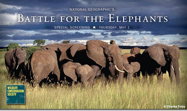 Greenwich Battle for the Elephants-Hawks