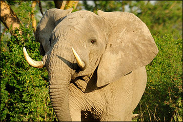 Poaching Crackdown