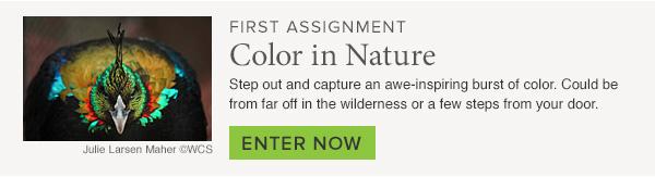 first-assignment